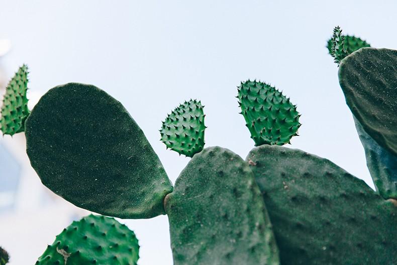 Livet Studio - Cactus